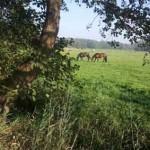 Lang leven in het dorp ~ Bestuur dorpshuis en dorpsraad Nigtevecht