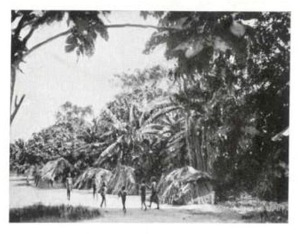 Photograph of a Batswa village. From Schebesta, Les Pygmées du Congo Belge.